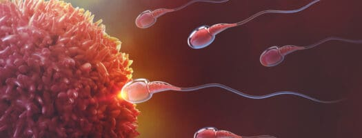When Does Conception Occur – What You Need to Know