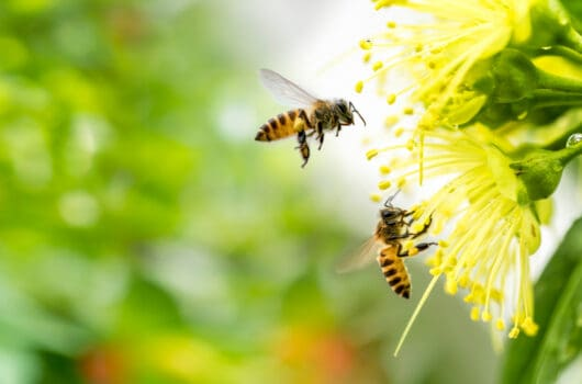 23 Names That Mean Honey Bee