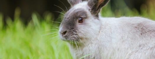 16 Names That Mean Rabbit